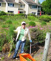 Volunteer Connie Lathrop at Shoreline Park