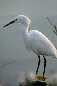 Egret by Margaret Farley